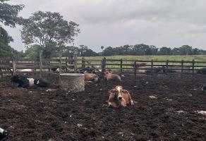 Foto de rancho en venta en s/c , tizimin centro, tizimín, yucatán, 13781147 No. 01