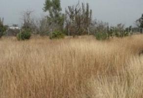 Foto de terreno habitacional en venta en servidumbre de paso lote 14 , el fraile, montemorelos, nuevo león, 12811007 No. 01