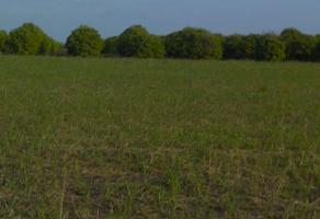 Foto de terreno habitacional en venta en servidumbre de paso lote 2 , el fraile, montemorelos, nuevo león, 12811002 No. 01