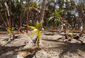 Foto de terreno habitacional en venta en sin nombre 33, mahahual, othón p. blanco, quintana roo, 0 No. 01