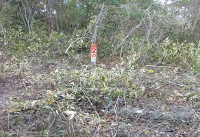 Foto de terreno habitacional en venta en s/n , chumpon, felipe carrillo puerto, quintana roo, 0 No. 01