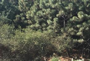 Foto de terreno comercial en venta en s/n , la primavera, zapopan, jalisco, 5866532 No. 01