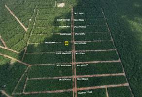 Foto de terreno habitacional en venta en s/n , leona vicario, felipe carrillo puerto, quintana roo, 0 No. 01