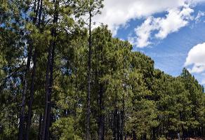 Foto de casa en venta en s/n , rancho laguna colorada de los lópez, durango, durango, 9988342 No. 02