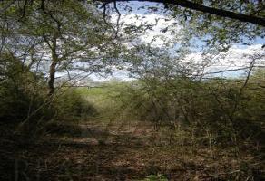 Foto de terreno comercial en venta en s/n , prados de san jerónimo, monterrey, nuevo león, 0 No. 01