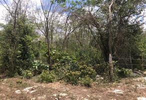 Foto de terreno habitacional en venta en sor juana inés de la cruz s/n , laguna guerrero, othón p. blanco, quintana roo, 0 No. 01