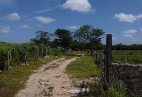 Foto de terreno habitacional en venta en  , temax, temax, yucatán, 0 No. 01