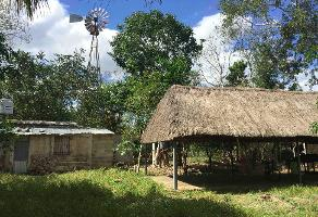 Foto de rancho en venta en  , temax, temax, yucatán, 6541026 No. 01