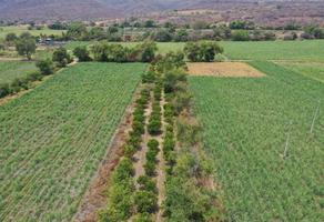 Foto de rancho en venta en  , ticuman, tlaltizapán de zapata, morelos, 0 No. 01