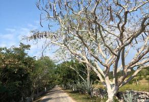Foto de terreno habitacional en venta en  , tixkuncheil, baca, yucatán, 0 No. 01