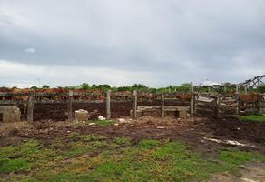 Foto de terreno habitacional en venta en  , tizimin centro, tizimín, yucatán, 0 No. 01