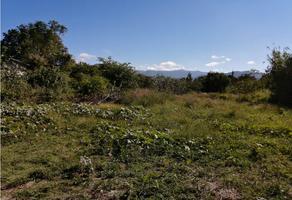 Foto de terreno habitacional en venta en  , tlalixtac, santa maría tlalixtac, oaxaca, 15979482 No. 01