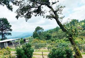 Foto de terreno habitacional en venta en  , toreo el bajo, uruapan, michoacán de ocampo, 18398760 No. 01