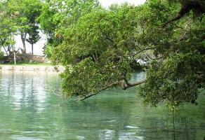 Foto de terreno comercial en venta en  , tucanes, benito juárez, quintana roo, 11176076 No. 01