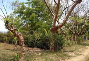Foto de terreno habitacional en venta en tulipán lote 9, paso colorado, boca del río, veracruz de ignacio de la llave, 7713222 No. 01