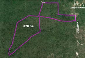 Foto de terreno habitacional en venta en  , tzacala, mérida, yucatán, 14072629 No. 01