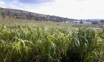 Foto de terreno habitacional en venta en  , aculco de espinoza, aculco, méxico, 2820858 No. 01