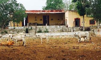 Foto de rancho en venta en  , cacalchen, cacalchén, yucatán, 0 No. 01