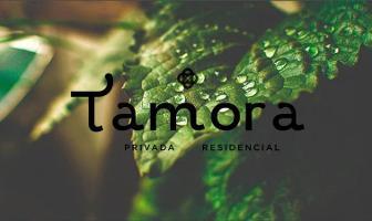 Foto de terreno habitacional en venta en  , conkal, conkal, yucatán, 11564325 No. 01