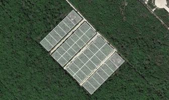 Foto de terreno habitacional en venta en  , conkal, conkal, yucatán, 3646627 No. 02