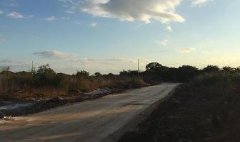 Foto de terreno habitacional en venta en  , dzitya, mérida, yucatán, 0 No. 02