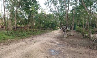 Foto de terreno habitacional en venta en fraccionamiento el roble 1 de lt 13 , alfredo v bonfil, benito juárez, quintana roo, 0 No. 01