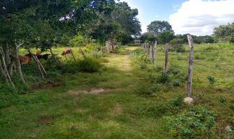 Foto de terreno habitacional en venta en  , izamal, izamal, yucatán, 18200756 No. 01
