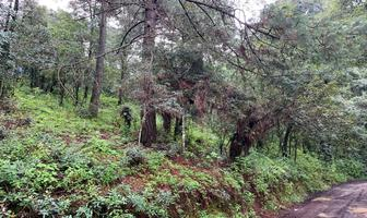 Foto de terreno habitacional en venta en  , los saúcos, valle de bravo, méxico, 18380238 No. 01