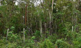 Foto de terreno habitacional en venta en manzana 54 región 15 , villas tulum, tulum, quintana roo, 12117988 No. 05