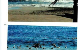 Foto de departamento en venta en  , marina ixtapa, zihuatanejo de azueta, guerrero, 11688847 No. 02