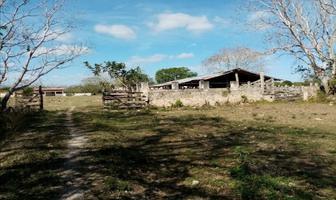 Foto de rancho en venta en  , panaba, panabá, yucatán, 16988001 No. 01