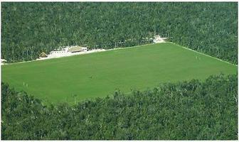Foto de terreno habitacional en venta en ruta de los cenotes , puerto morelos, puerto morelos, quintana roo, 14157449 No. 01
