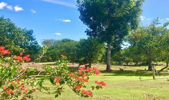 Foto de terreno habitacional en venta en  , sitpach, mérida, yucatán, 11305761 No. 01