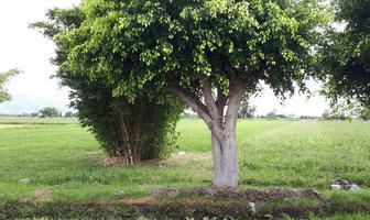 Foto de terreno habitacional en venta en s/n , juan uvera, atlixco, puebla, 16410388 No. 01