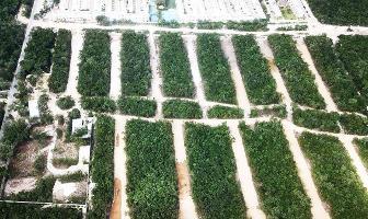 Foto de terreno habitacional en venta en valenia , ejidal, solidaridad, quintana roo, 0 No. 01
