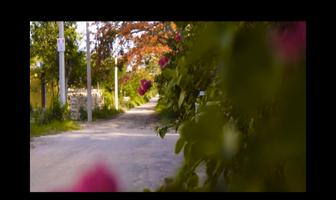Foto de terreno habitacional en venta en  , yaxkukul, yaxkukul, yucatán, 17542290 No. 01