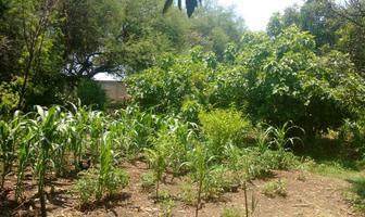 Foto de rancho en venta en  , zona sur tequisquiapan, tequisquiapan, querétaro, 0 No. 21
