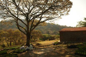 Foto de terreno habitacional en venta en San Miguel Tlaxcaltepec (Barrio Centro), Amealco de Bonfil, Querétaro, 4520707,  no 01