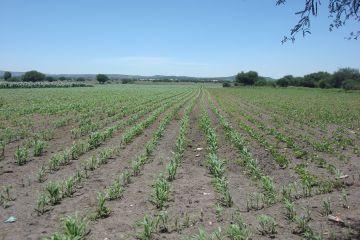 Foto de terreno industrial en venta en El Carrizal, Colón, Querétaro, 2981854,  no 01