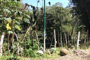 Foto de terreno habitacional en venta en avenida de las hayas 10, mariano escobedo, coatepec, veracruz de ignacio de la llave, 0 No. 01