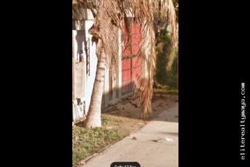 Foto de terreno habitacional en venta en  , bella vista, concepción del oro, zacatecas, 4641964 No. 01