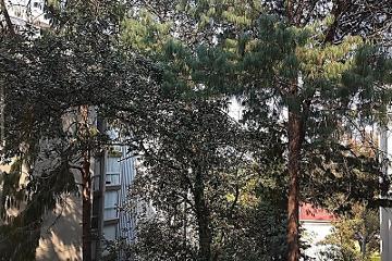 Foto de departamento en renta en  , san jerónimo lídice, la magdalena contreras, distrito federal, 2889827 No. 01