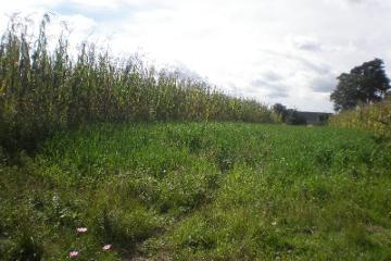 Foto de terreno comercial en venta en  , central de abastos, puebla, puebla, 2707402 No. 01