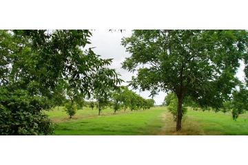 Foto de rancho en venta en  , derramadero, saltillo, coahuila de zaragoza, 2293410 No. 01