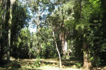 Foto de terreno habitacional en venta en el haya 100, mariano escobedo, coatepec, veracruz de ignacio de la llave, 4363589 No. 01
