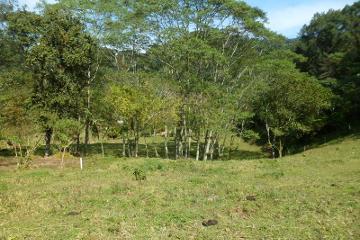 Foto de terreno habitacional en venta en encino 100, cuauhtémoc, coatepec, veracruz de ignacio de la llave, 4503945 No. 01