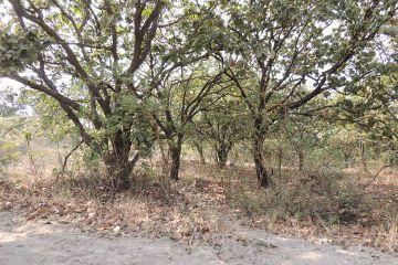 Foto principal de terreno industrial en venta en paseo del bosque # 56, el arenal 2347099.