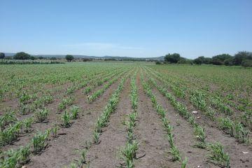 Foto de terreno industrial en venta en El Arroyito, Colón, Querétaro, 2981787,  no 01