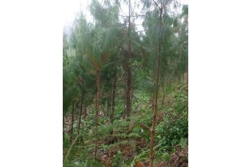 Foto de rancho en venta en  , hueyapan centro, hueyapan, puebla, 2798840 No. 01