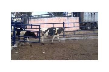 Foto de rancho en venta en  , pedro escobedo centro, pedro escobedo, querétaro, 2663410 No. 01